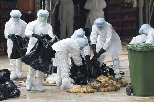 The-H7N9-bird-flu-in-China-with-the-fifth-death